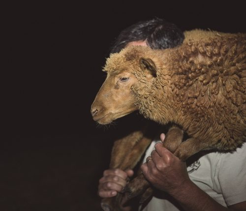 Alexandre Delmar A fala das cabras e dos pastores, 2018–19 Video Full HD
